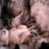 Cutest Kitten Video Ever