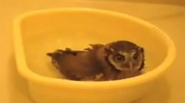 bath owl