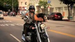 bikercat