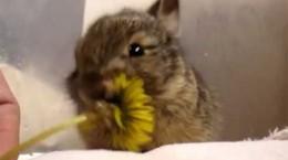 bunnyeatstinyflower