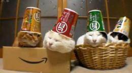 catswithcupsashats
