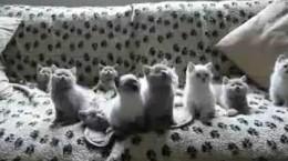 kittensboptheirheadtomusic