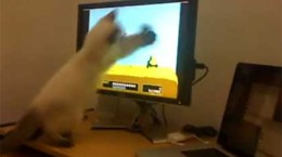 catplaysduckhunt