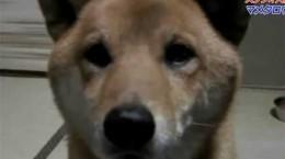 dogbarksquieteroncommand