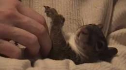 squirrelgetsbellyrub