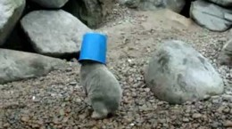 polarbearbuckethead