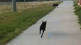 dogfetchesdeafdog
