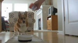 corgidoesadanceforkibble