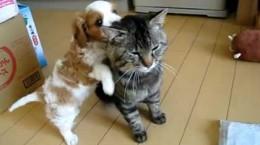 puppyvscat